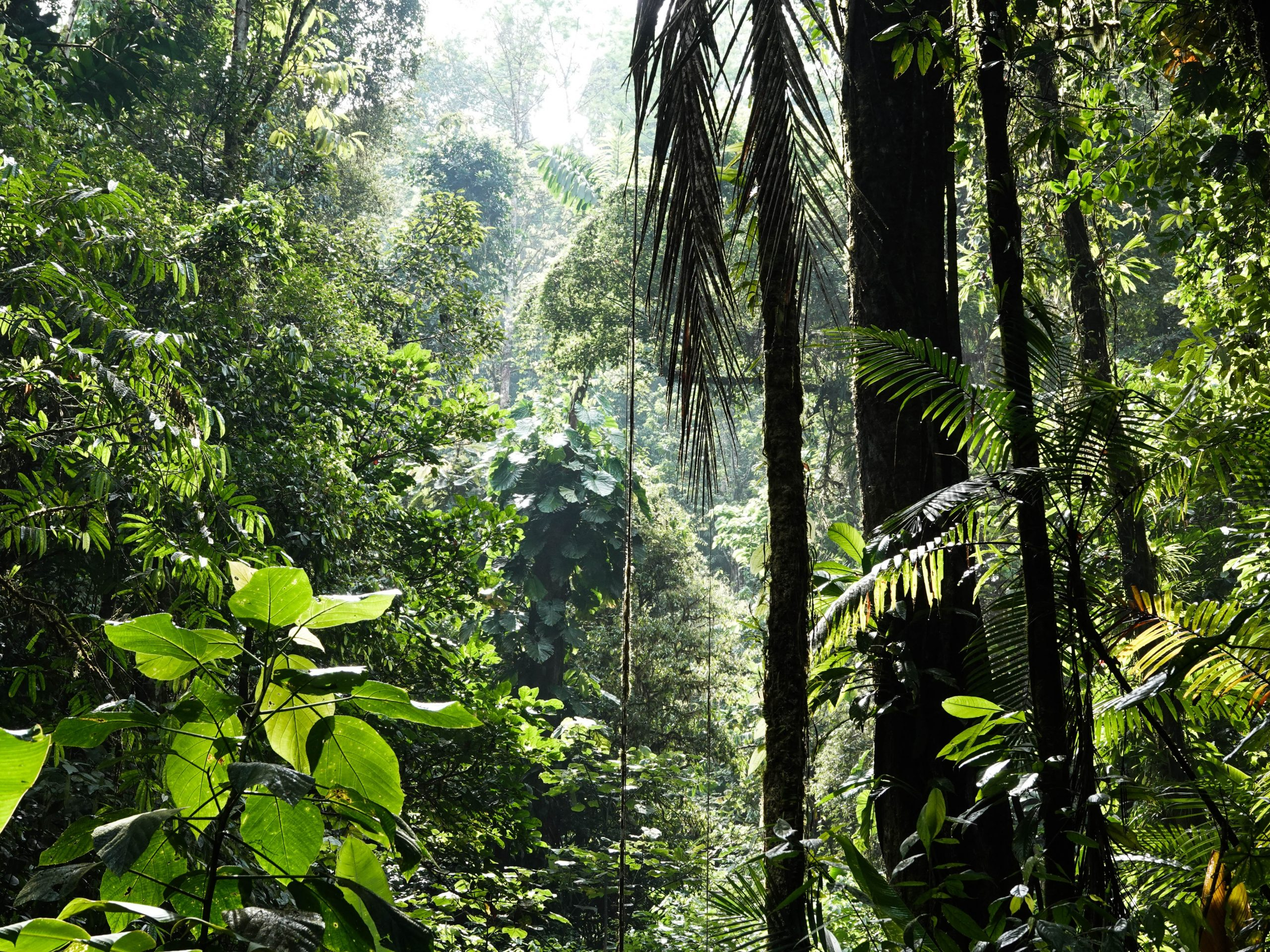 bosque y diversidad